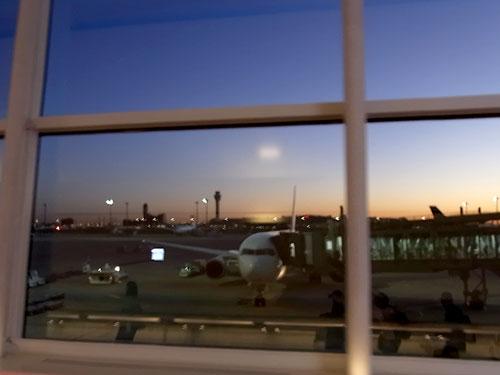 写真:夜明けの羽田空港に到着した私の乗ってきた飛行機。シンガポールからお疲れさま