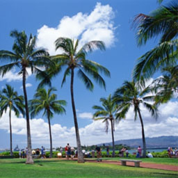 写真:オアフ島、マウイ島、ハワイ島、どこの島に行っても同代金の羽田発ツアーが人気