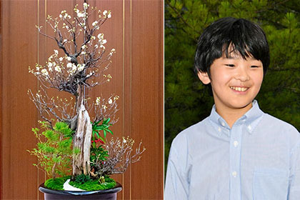 【Asahi.com article】【Today's English】Prince Hisahito puts finishing touches on bonsai on display