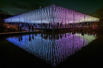 【Asahi.com article】【Today's English】Great wisterias at Ashikaga park lit up in colorful fantasy at night
