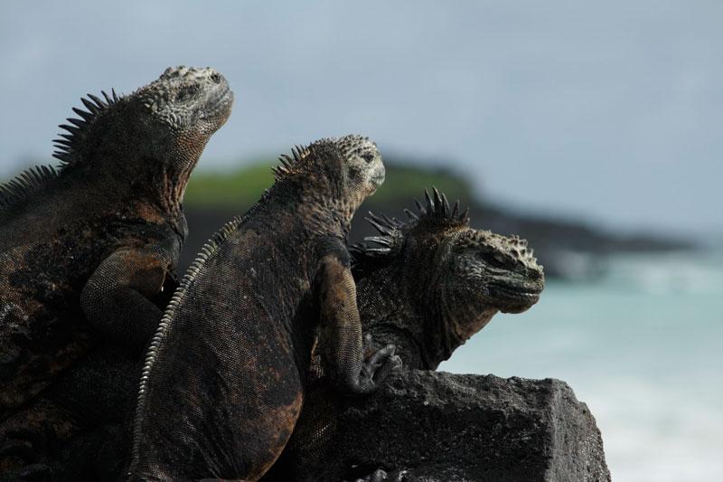 ガラパゴス諸島の画像 p1_11
