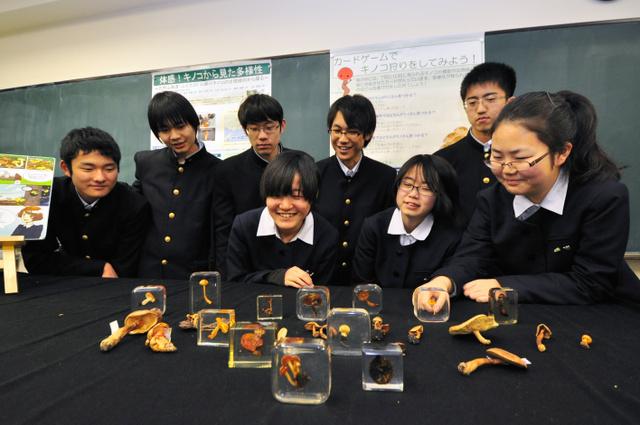 六甲山で採集したキノコの標本を前にした部員たち=神戸市東灘区御影石町4丁目の御影高校