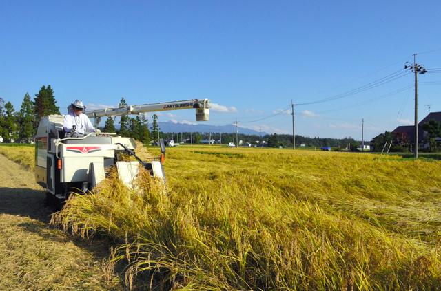 コンバインで収穫する原さん。地域ぐるみで有機栽培に取り組むため、近隣の田畑から農薬が飛んでくる恐れもないことが特徴だ=9日、福島県喜多方市熱塩加納町
