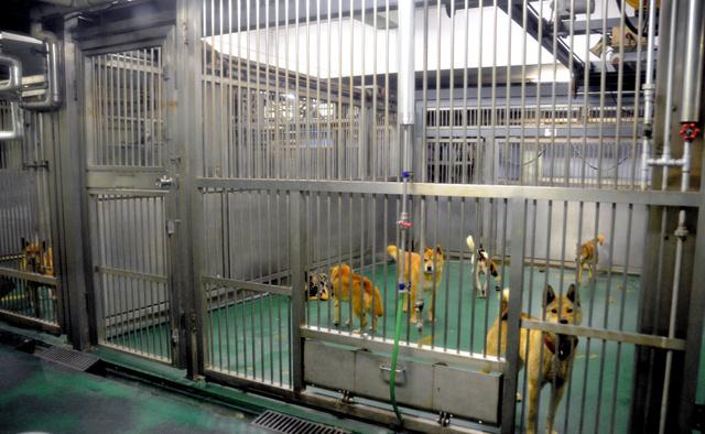 写真・図版 かつては殺処分を待つ犬が大量に収容され、処分が近づくごとに処分機のある... 犬の殺
