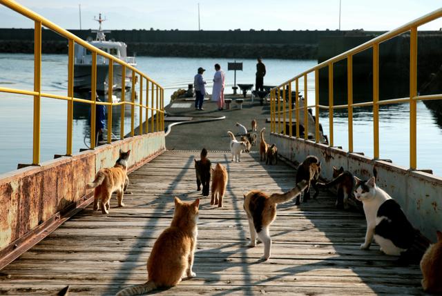 長浜からの渡船が近づいてくると、ゆっくり乗り場へ集合=愛媛県大洲市の青島、山本正樹撮影