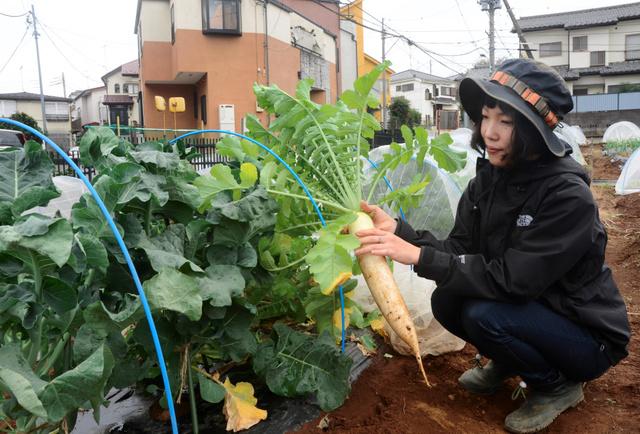 都心の空き農地が市民農園に サポート充実で利用増える:朝日新聞デジタル