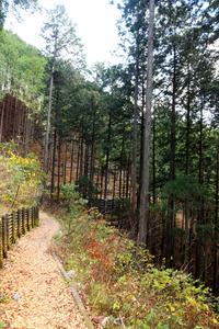 木製チップが敷き詰められた「登計トレイル」=東京都奥多摩町氷川