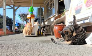 養老渓谷駅にいる3匹の猫=千葉県市原市朝生原