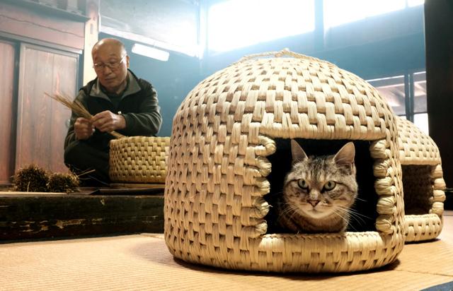 気持ちよさそうに「猫ちぐら」に入る伊藤マリさんの飼いネコ。稲わらは夏は涼しく、冬は暖かいという=新潟県関川村、関田航撮影