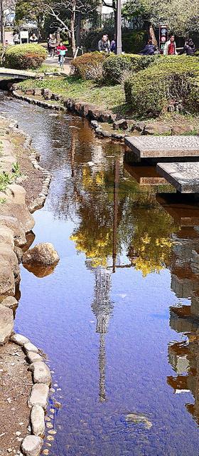 水と親しめる細い流れに姿を変えた大横川。ミモザの花と東京スカイツリーが映る=東京都墨田区