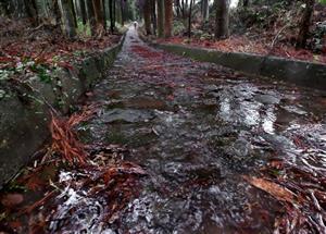 雨に濡れる石畳の道。鎌研坂とともに、「草枕の道」の核心部だ=熊本市西区