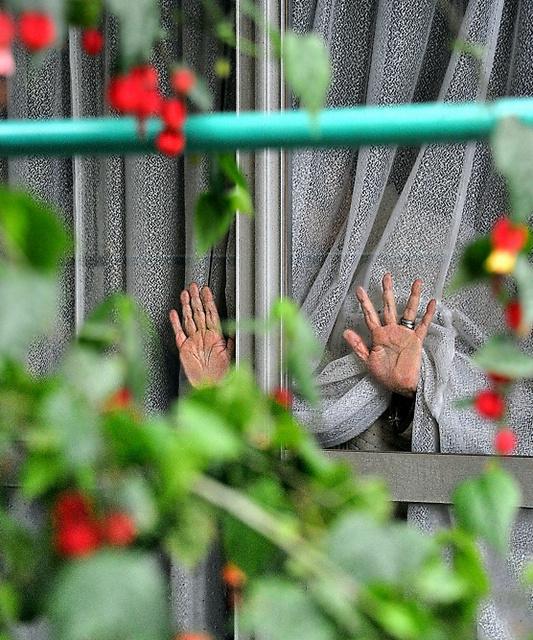 近所の女性と養子縁組した認知症の女性。レースのカーテン越しに外を見る=14日午後、関東地方北部、仙波理撮影