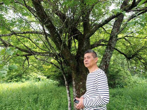 山小屋で使う木を探しに気仙沼を訪れた糸井重里さん=「ほぼ日刊イトイ新聞」提供
