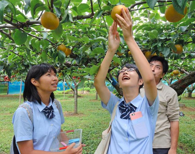 夏休みの宿題は地域観光振興 県立鎌ケ谷高