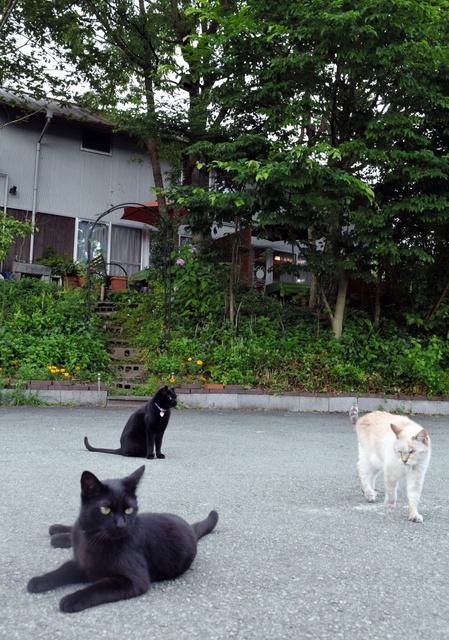 宿の前の路上でのんびりと過ごす猫たち=由布市湯布院町