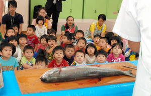 秋サケが卵を抱いている説明を聞いて、子どもたちからは「イクラ好き!」と声があがった=豊島区、若草保育園