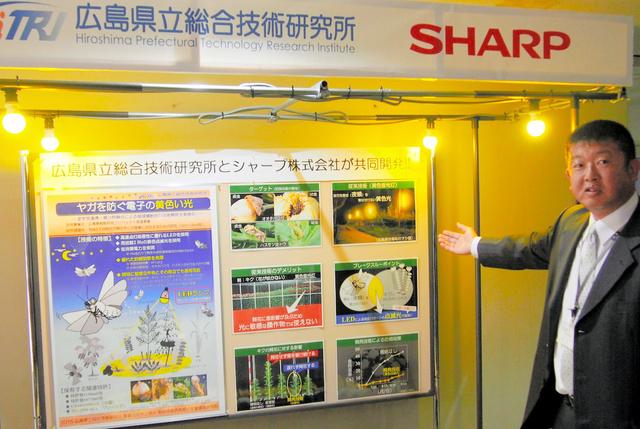 シャープが広島県と共同開発した黄色いLEDランプ。蛾(が)を寄せつけないことを県の担当者が説明した=13日、同社提供