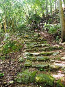 大辺路刈り開き隊が、やぶを伐採して復活させた新田平見の古道=和歌山県串本町