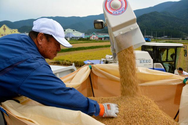 コシヒカリを収穫する農家の玉井宇一郎さん=9月16日、福井県若狭町