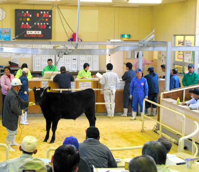 岡山県内で開かれた和牛子牛のせり。高値の傾向が続いている=11月6日、岡山県真庭市