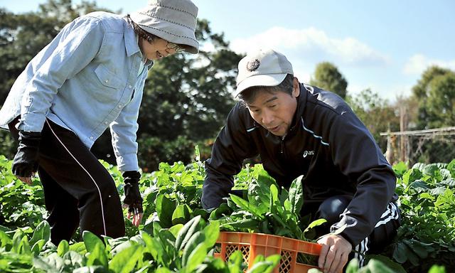 野菜を収穫する曽根勝一道さん(右)と重美さん=堺市、仙波理撮影