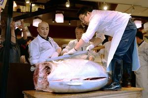 客の前で解体される、初競りで1400万円で落札されたマグロ=5日午後、東京・築地、白井伸洋撮影