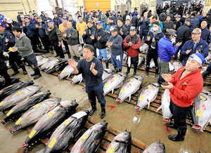 Seafood brokers celebrate the start of the first auction of the year of freshly harvested tuna at Tokyo's Tsukiji market on the morning of Jan. 5. (Shiro Nishihata)◇生マグロの初競りを前に、一本締めをする仲買人ら=5日午前4時49分、東京都中央区の築地市場、西畑志朗撮影