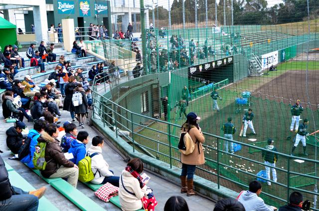 オリックスのキャンプ地に駆けつけたファンたち=6日、宮崎市の市清武総合運動公園