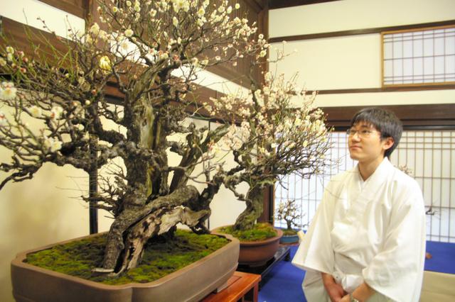 展示された梅の花。部屋中に甘い香りが漂う=大阪市北区