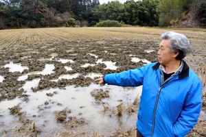 イノシシに荒らされた田んぼを示す君塚勝弘さん。土の中に残った米を食べるために穴を掘っていくという=千葉県大多喜町弥喜用