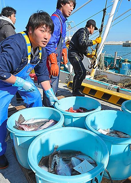松川浦漁港で続く底引き網漁の試験操業。水揚げ量は震災前と比べわずかだ=福島県相馬市