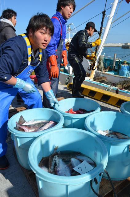 松川浦漁港で続く底引き網漁の試験操業。水揚げ量は震災前と比べごくわずかだ=福島県相馬市