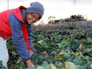 有機無農薬で育った新野菜