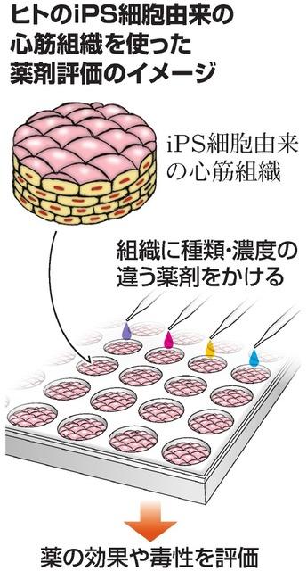 ヒトのiPS細胞由来の心筋組織を使った薬剤評価のイメージ