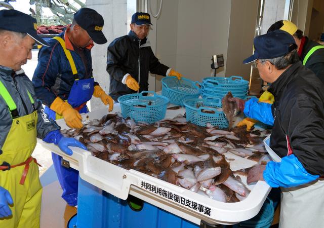 水揚げされた魚を仕分ける仲買人たち=2月17日、福島県いわき市の小名浜魚市場、岡本進撮影