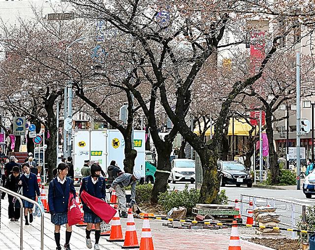 桜並木と歩道の再整備が進む東急田園都市線たまプラーザ駅前の通り=25日、横浜市青葉区、池永牧子撮影
