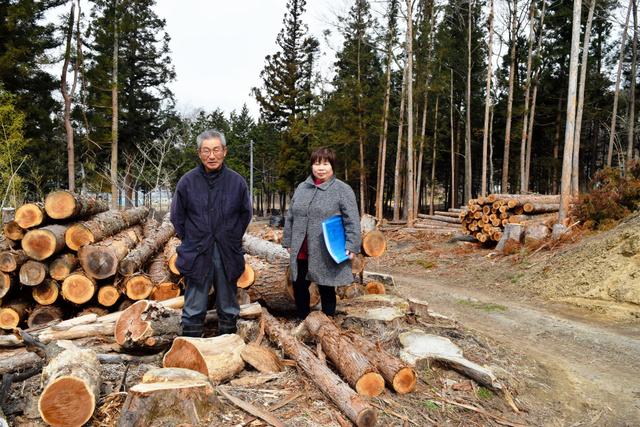 菅野さん夫妻の自宅の裏には、除染で伐採された、自ら植えた杉がまだ多数残る。夫妻は「すべて活用したい」=飯舘村草野