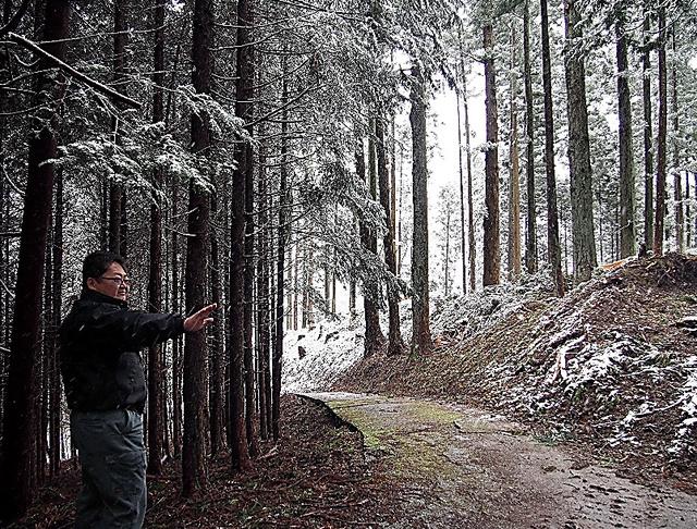 間伐を進めた林(右側)と荒れたままの林(左側)では、CO2の吸収効率も異なる=山梨県早川町、青山直篤撮影