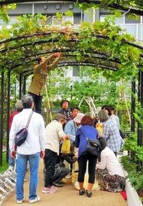 首都高大橋ジャンクションの屋上を活用した目黒天空庭園。収穫したブドウでワイン造りも=東京都目黒区大橋1丁目(大橋エリアマネジメント協議会提供)