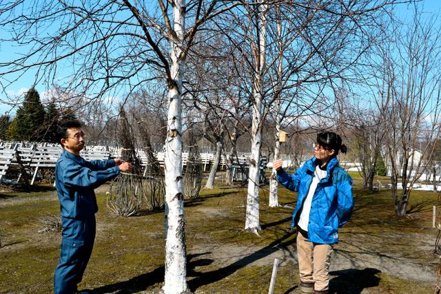花粉の少ないシラカバの育成状況を見る道総研林業試験場の脇田陽一研究主幹(左)と内山和子研究主任=美唄市