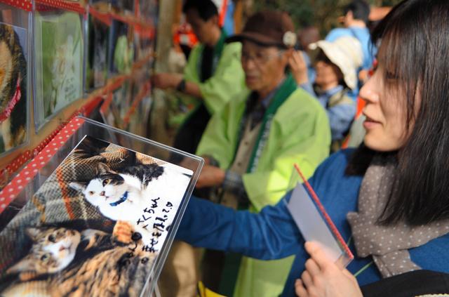 参拝者たちは愛猫の写真にメッセージを添えて掲示板に掲げた=福島市御山の西坂稲荷