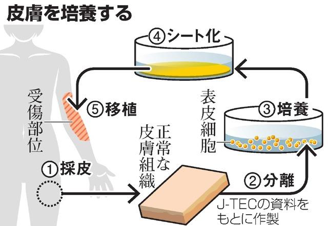 皮膚を培養する