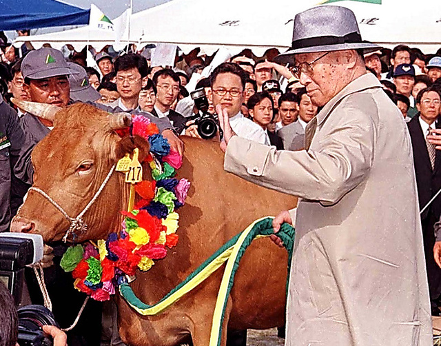 1998年6月16日、南北の軍事境界線に近い臨津閣で牛の様子を見る鄭周永・現代グループ名誉会長(当時)。支援のための牛500頭とともに北朝鮮へ向かった=ロイター