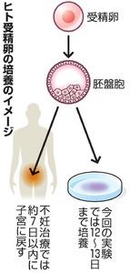 ヒト受精卵の培養のイメージ