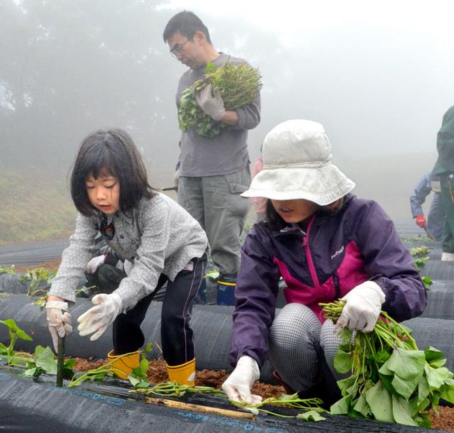 サツマイモの苗を植える親子連れ=薩摩川内市高江町
