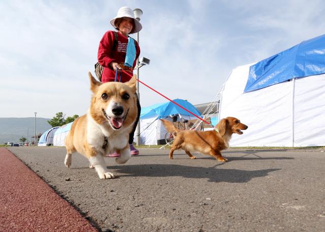 ペット同伴者を中心に借りられるテントで家族3人、愛犬3匹と暮らしている宮崎律子さん(64)=2日、小宮路勝撮影