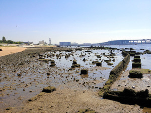 甲子園浜で干潮になると見える「遺跡」は何?