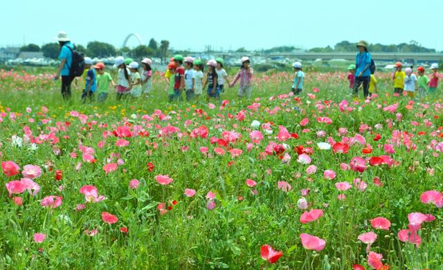 ポピーの花畑の周りを楽しそうに歩く園児たち=平塚市馬入