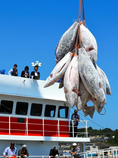 多くの人が見守る中、マグロが水揚げされた=いわき市の小名浜港