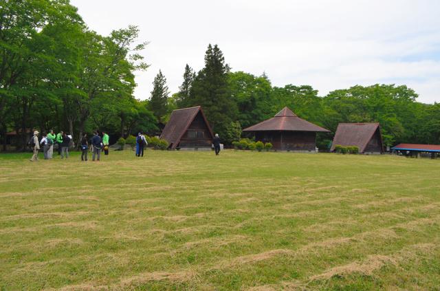 九州災害時動物救援センターとして生まれ変わる元キャンプ場。バンガローが犬舎に、芝生広場が遊び場になる=九重町湯坪